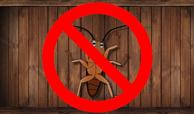 天然殺蟑螂的方法,一次教你殺蟑、除蟑、滅蟑秘訣,讓你擁有安穩居家環境!